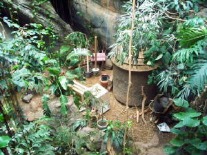 Knight Rainforest Exhibit