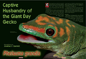 Reptilia Article- Giant Day Gecko, Phelsuma grandis