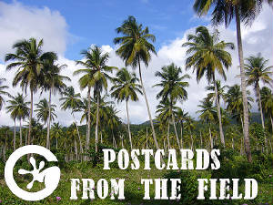 Postcards from the field