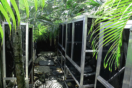 Custom outdoor enclosures at GiantDayGecko.com