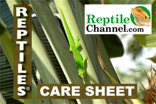 REPTILE CHANNEL Care Sheet
