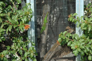 GiantDayGecko.com CAGING