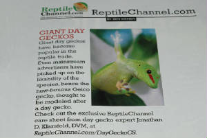 Care Sheet, Giant Day Geckos, Phelsuma grandis